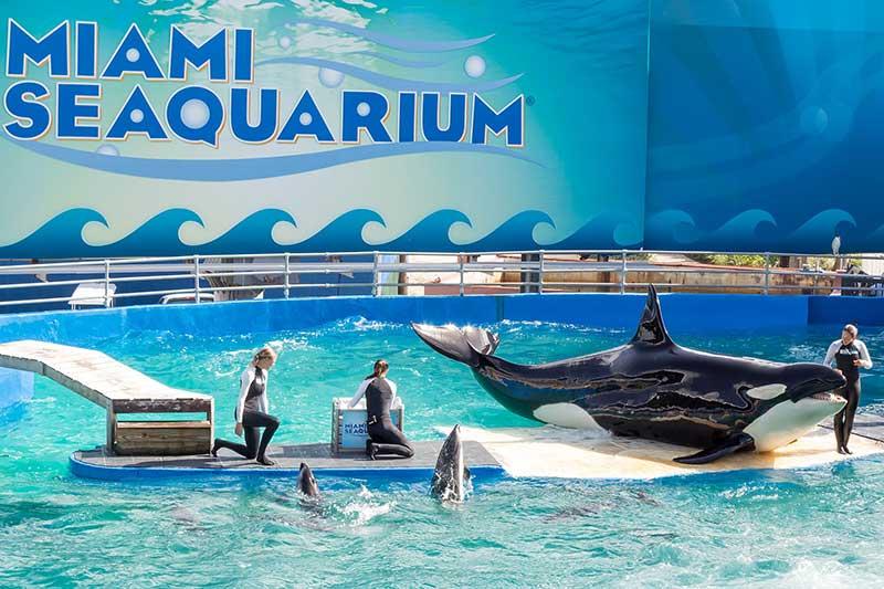 Seaquarium, Miami